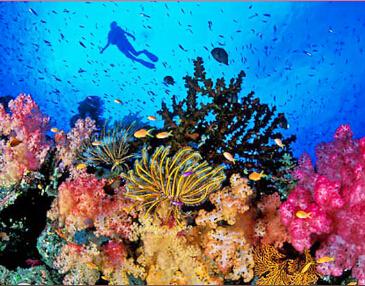 巴厘岛+金银岛出海+蓝梦岛5晚7天游